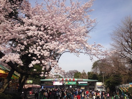 IMG_0922 上野公園.jpg