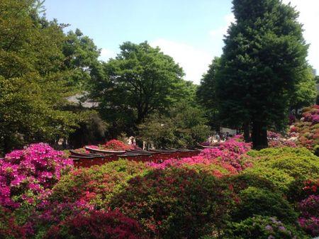 IMG_1372 根津神社 つつじ祭り.jpg