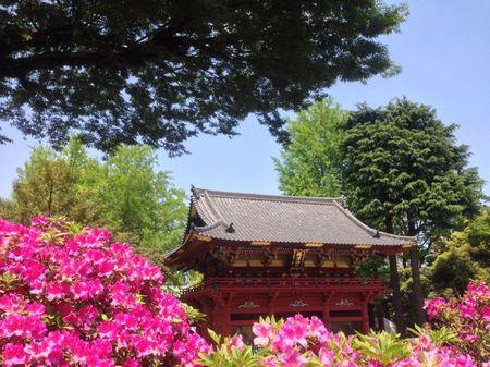 IMG_1375 根津神社 つつじ祭り.jpg
