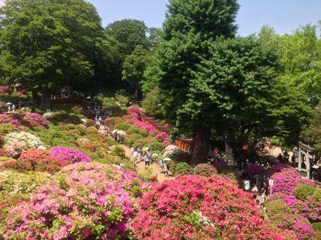 IMG_1379 根津神社 つつじ祭り.jpg