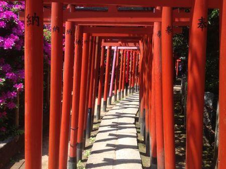 IMG_1385 根津神社 つつじ祭り.jpg
