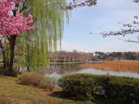 IMG_0935 上野公園.jpg